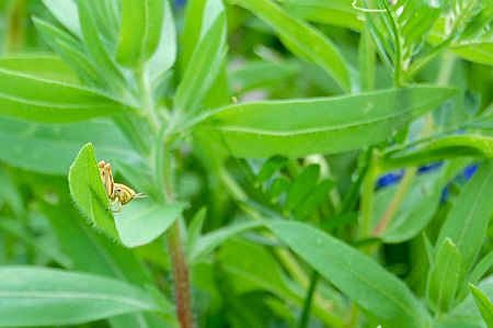 Tiny Grasshopper in the Wildflowers