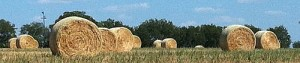 Hay Fields in Texas and Rollback Taxes